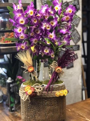4 Köklü Mor Singapur Orkide