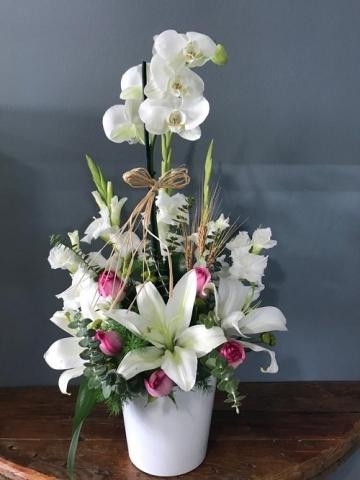 Pembe Güllü Orkide
