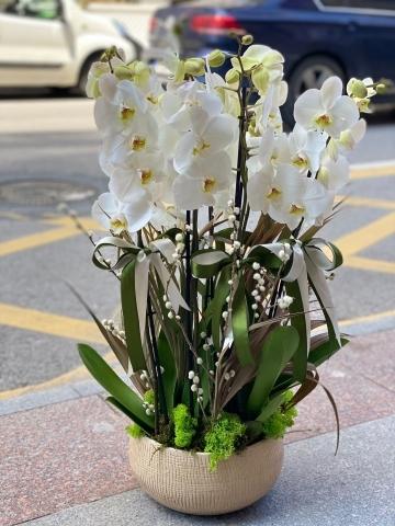 Aranjmanlı 6 Dal Orkide